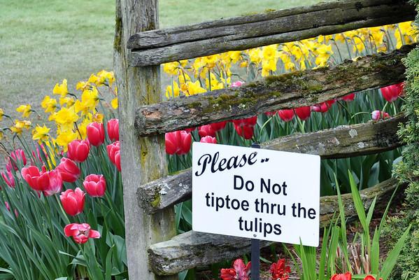 Tulip Festival April 2014